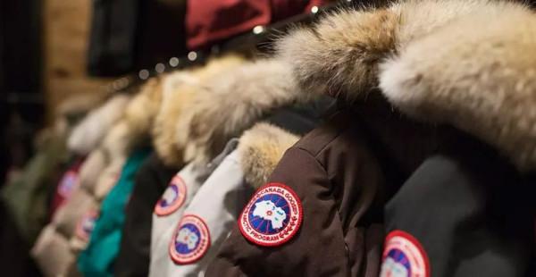 10000元一件的「加拿大鹅」,将毁于中国山寨还是残忍杀戮野生动物?